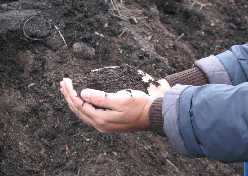 Compost Olipe Olivarera Los Pedroches Olivar de sierra