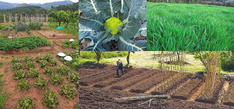 Agricultura Biodinamica Olivarera Los Pedroches Olivar de Sierra Aceite ecologico