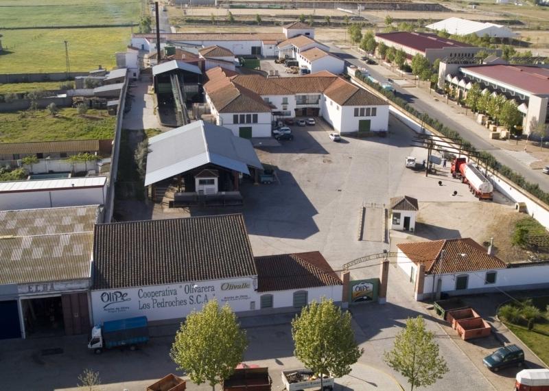Olivarera Los Pedroches. Olivar de Sierra. Aceite Ecológico. Olivalle. Olipe.