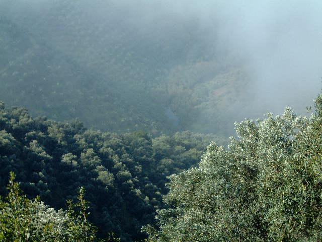 Olivar con niebla 3