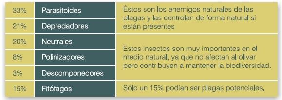 Insectos capturados en olivares olivar de sierra los pedroches aceite ecologico olipe olivalle olivarera