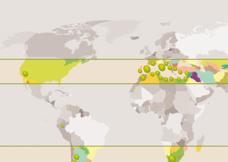 mapa_mundial_aceite_oliva