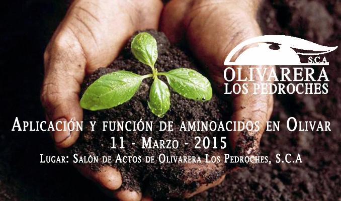 Aplicacion-y-funcion-de-aminoacidos-en-olivar Aceite ecologico Olivar de sierra los pedroches olivarera olipe olivalle